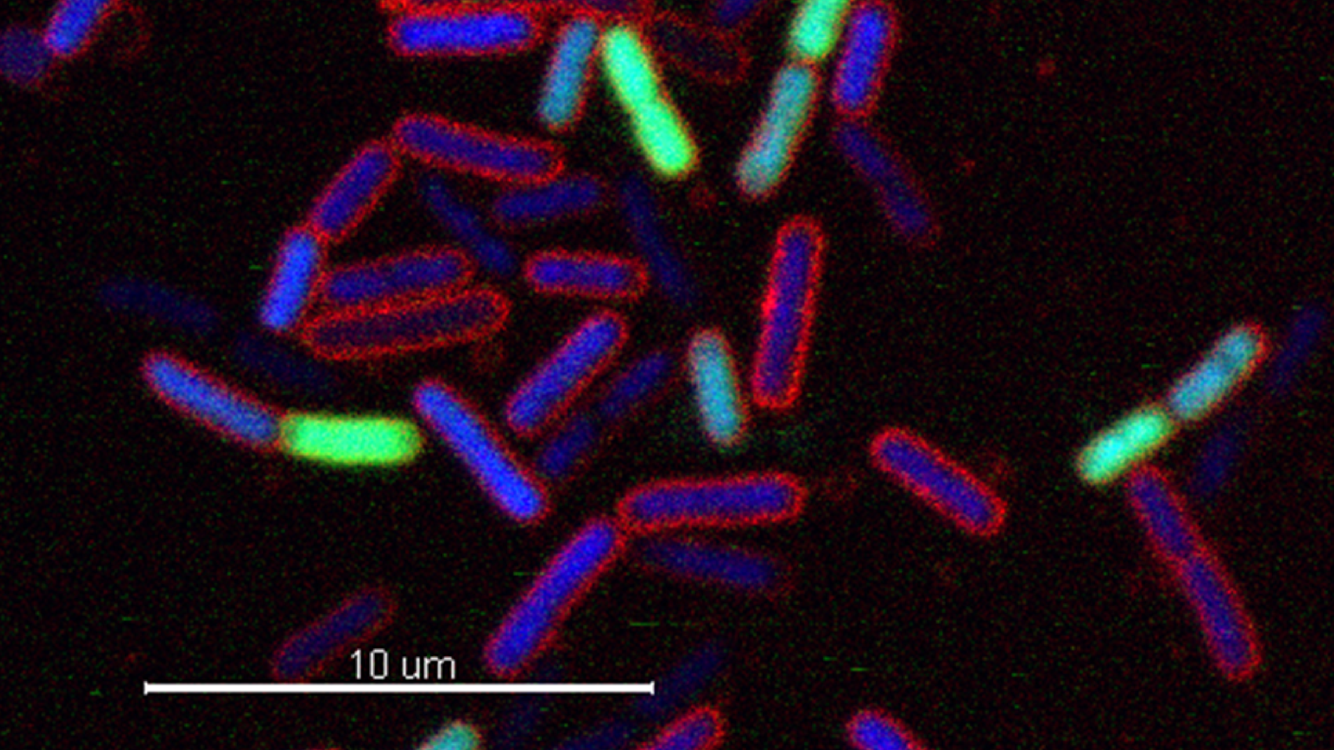 Picture Bacteria Strands